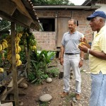 Edgar Lemos (foreground) samples one of Ecuador's non-export banana varieties.