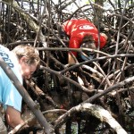 Anne Chamberlain (left) and Emily Dangremont tickle the mangrove roots for crabs on Isla Popa.