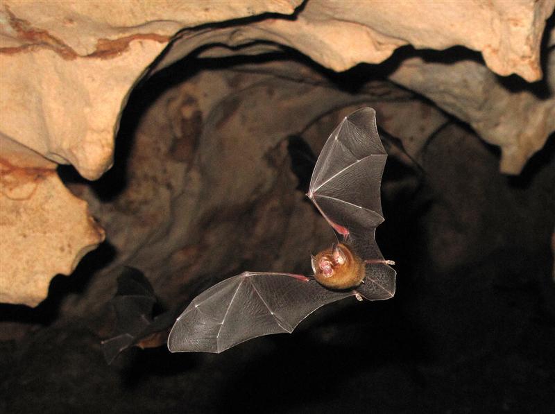 In the bat