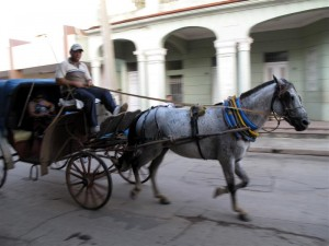 The sound of horses' hooves on the streets is one of the pleasures of early morning in Cuba.