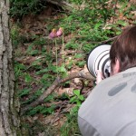 Tim stalking the elusive pink ladyslipper.