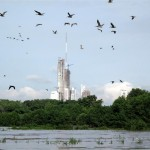 Pelicans, mangroves and the highrises of Panama City.